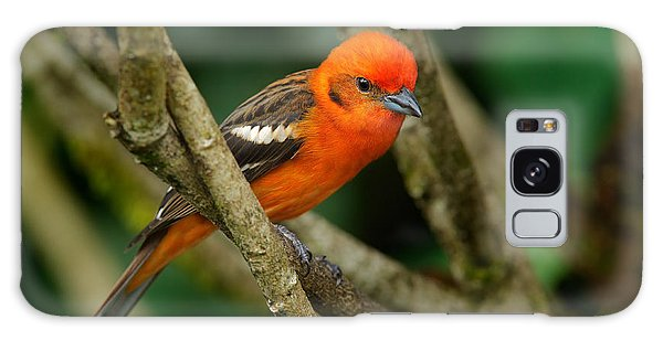 Perches Galaxy Case - Orange Bird Flame-colored Tanager by Ondrej Prosicky