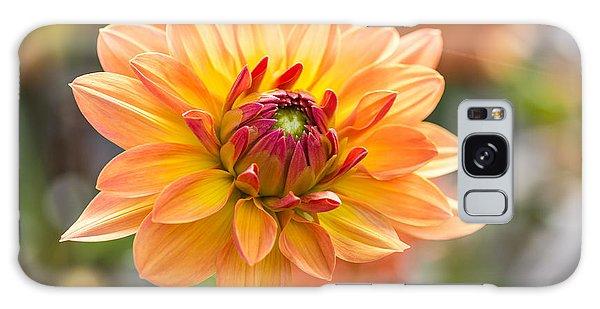 Decorative Galaxy Case - Orange Flower Chrysanthemum, Purple by Echoevg