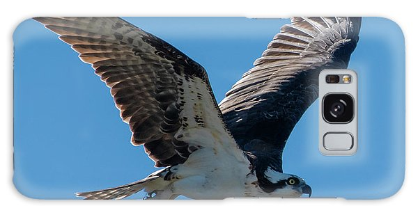 Galaxy Case featuring the photograph Osprey In Flight by Ken Stampfer