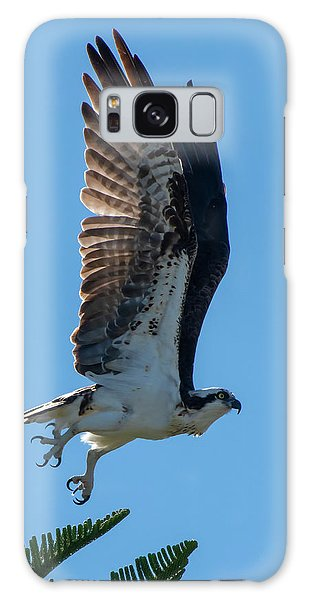 Osprey Taking Flight Galaxy Case