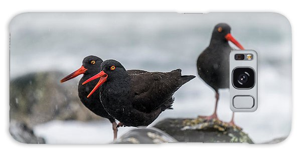 Oystercatchers In The Rain Galaxy Case