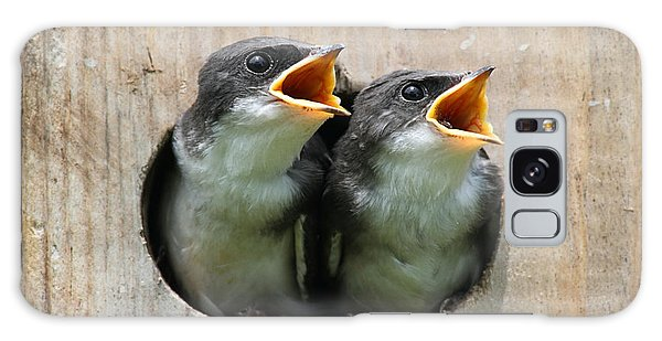 Perches Galaxy Case - Pair Of Hungry Baby Tree Swallows by Steve Byland