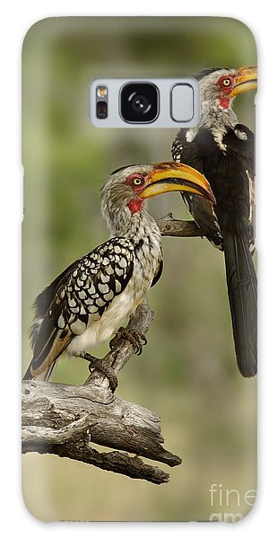 Perches Galaxy Case - Pair Of Southern Yellowbilled Hornbills by Johan Swanepoel