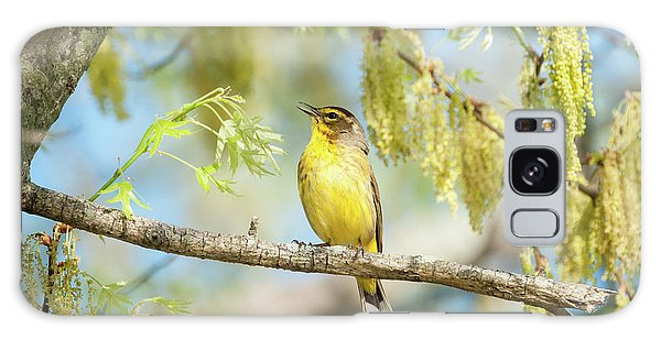 Palm Warbler Singing Galaxy Case