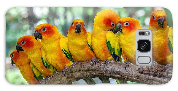 Perches Galaxy Case - Parrot by Apple2499