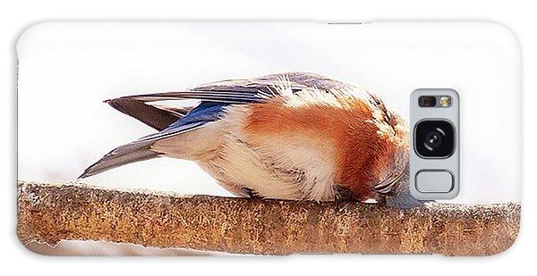 Peek-a-boo Blue Bird Galaxy Case