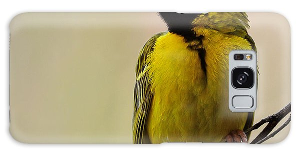 Perches Galaxy Case - Perched Breeding Male Southern Masked by Pictureswild