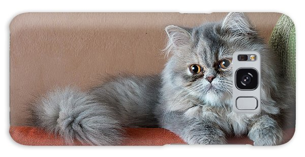 Furry Galaxy Case - Persian Cat On The Couch by Valerio Pardi