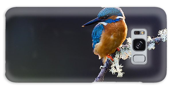 Perches Galaxy Case - Photo Of A Common Kingfisher Alcedo by Andrewsproule