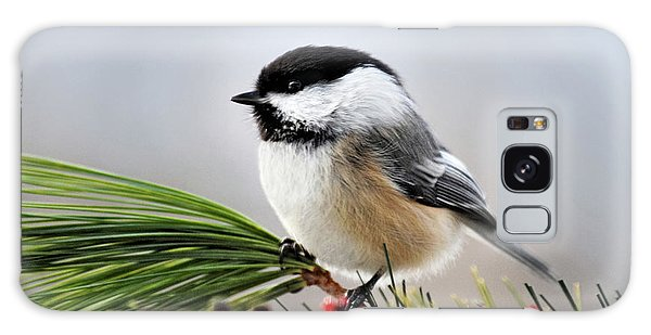 Pine Chickadee Galaxy Case