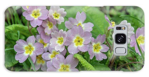 Pink Primroses In Devon Galaxy Case