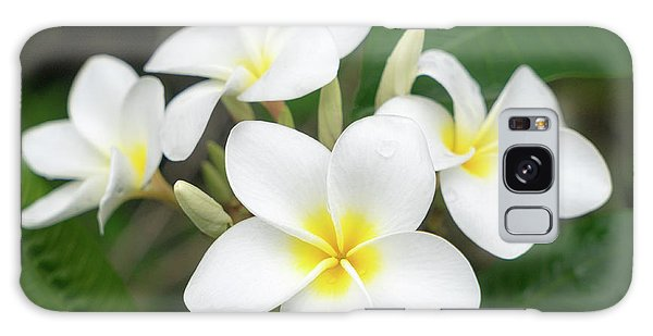 Pleasing Plumeria Galaxy Case