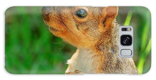 Pondering Squirrel Galaxy Case