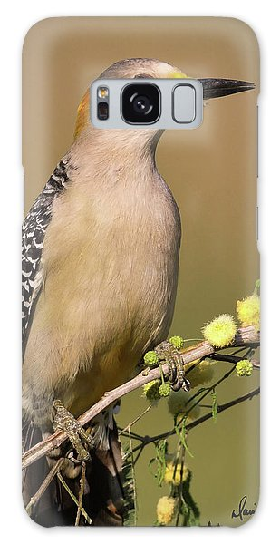 Portrait Of A Golden-fronted Woodpecker Galaxy Case
