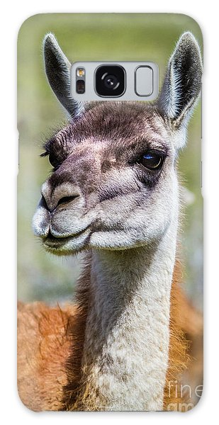 Portrait Of A Guanaco, Patagonia Galaxy Case