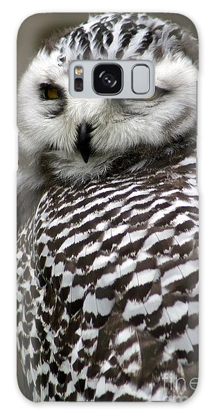 Perches Galaxy Case - Portrait Of A Majestic Spotted Owl by Paul Banton