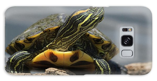 Portrait Of A Turtle Galaxy Case