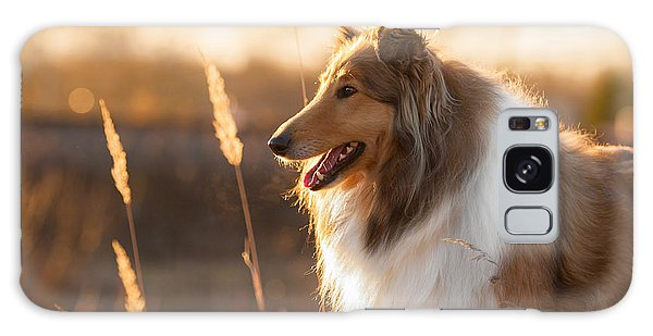 Scottish Galaxy Case - Portrait Of Rough Collie At Sunset by Grigorita Ko