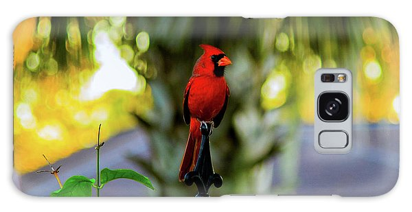Proud Male Cardinal Galaxy Case