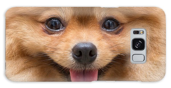 Furry Galaxy Case - Puppy Pomeranian Dog Cute Pets In Home by Suti Stock Photo