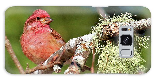 Purple Finch Galaxy Case
