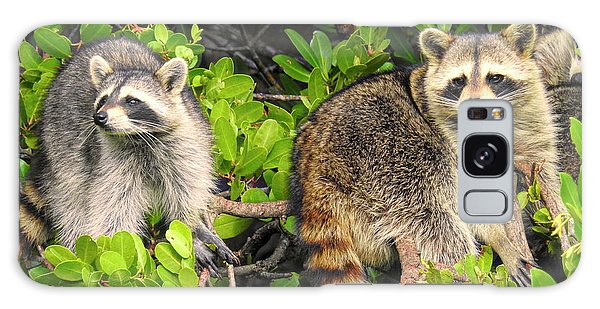 Raccoons In The Mangroves Galaxy Case