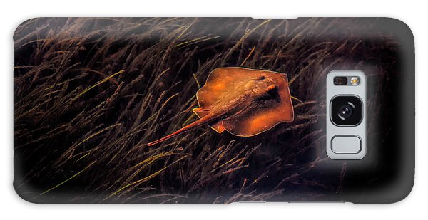 Ray In The Grass Flats Galaxy Case