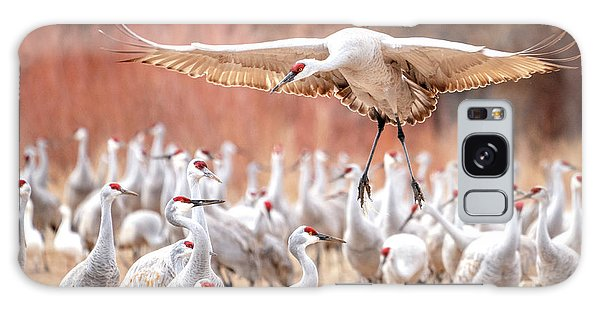 Ready Or Not, Here I Come -- Sandhill Cranes Galaxy Case