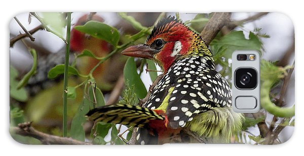 Red-and-yellow Barbet Galaxy Case