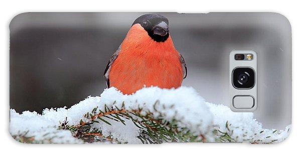 Claws Galaxy Case - Red Songbird Bullfinch Sitting On Snowy by Ondrej Prosicky