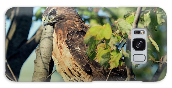 Red-tailed Hawk Looking Down From Tree Galaxy Case
