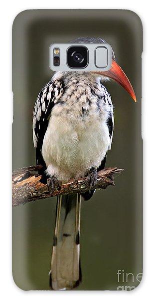 Perches Galaxy Case - Redbilled Hornbill Tockus by Johan Swanepoel