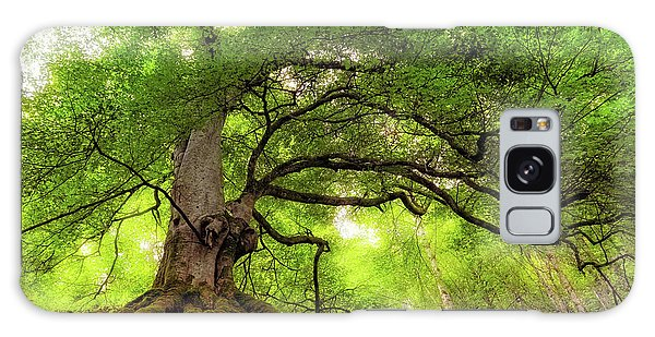 Roots Of Taymouth Estate - Scotland - Beech Tree Galaxy Case