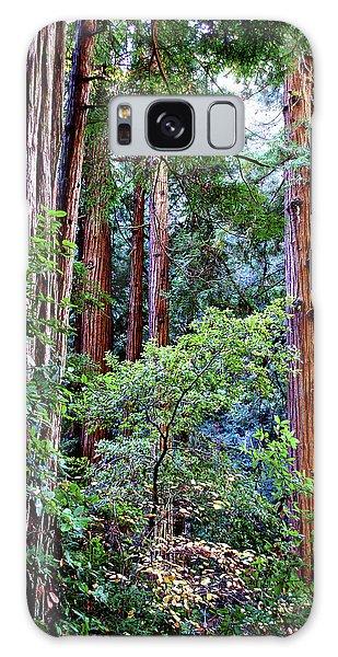 Samuel Taylor Redwoods 1 Galaxy Case