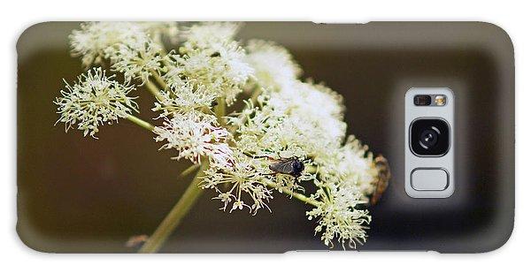Scotland. Loch Rannoch. White Flowerhead. Galaxy Case