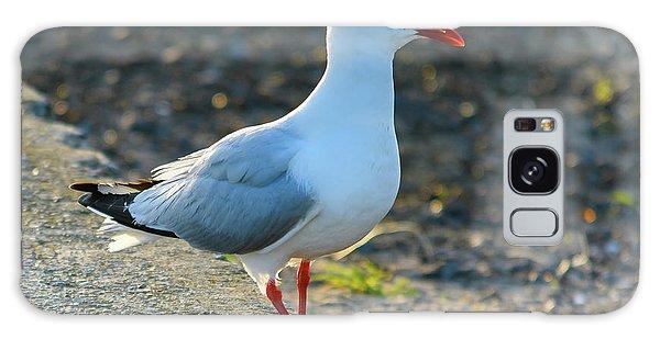 Seagull On The Breakwall Galaxy Case