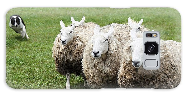 Pasture Galaxy Case - Sheep And Dog by Makieni