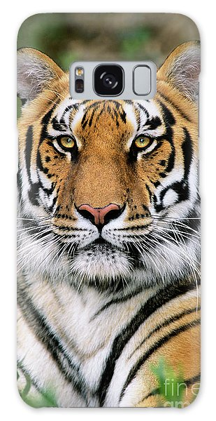 Siberian Tiger Staring Endangered Species Wildlife Rescue Galaxy Case