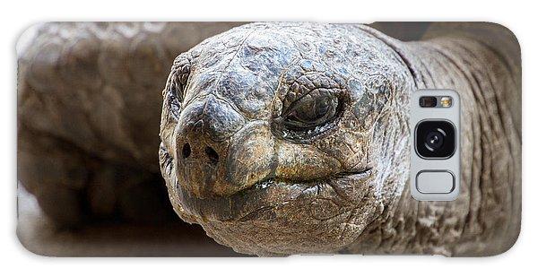 Turtle Galaxy Case - Side Portrait Of Native Aldabra Giant by Mr Lemon