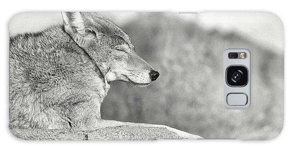 Sleepy Coyote Galaxy Case