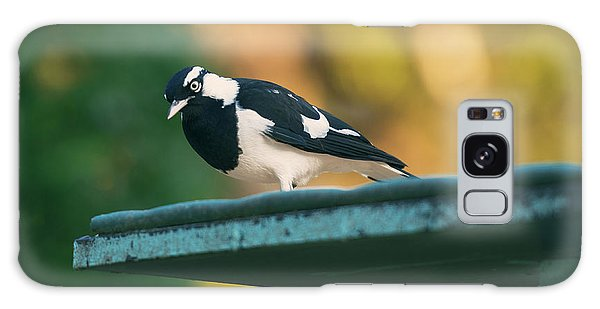 Small Magpie Lark Outside In The Afternoon Galaxy Case