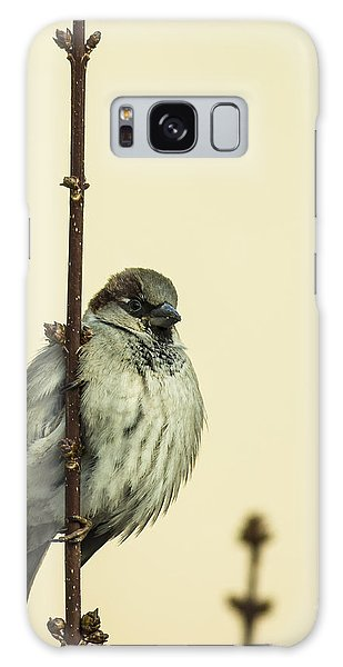 Perches Galaxy Case - Small Passerine Bird Sitting On The by Martin Janca