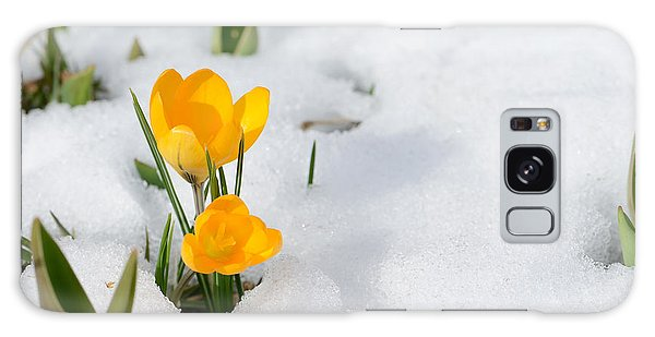 New Leaf Galaxy Case - Snowdrops Crocus Flowers In The Snow by Er 09