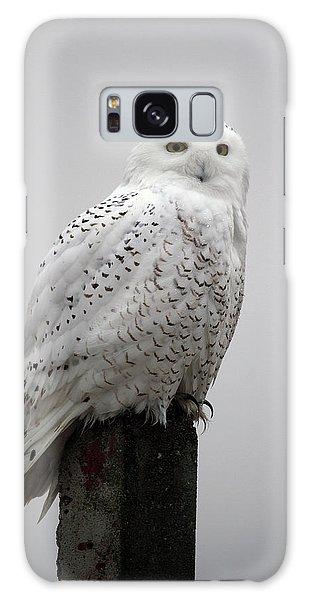 Snowy Owl In Fog Galaxy Case