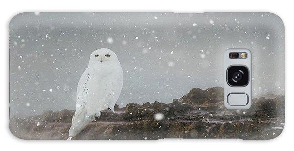 Snowy Owl On A Ledge Galaxy Case