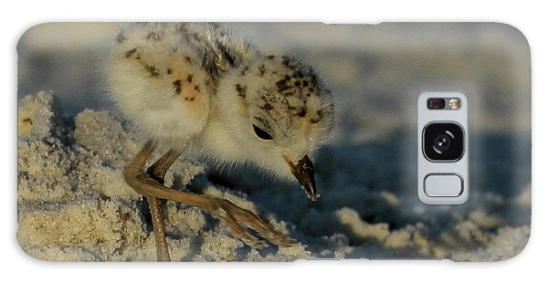 Snowy Plover On The Hunt Galaxy Case