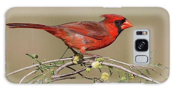 South Texas Cardinal Galaxy Case