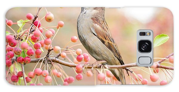 Sparrow Eating Berries Galaxy Case