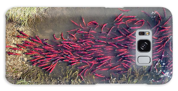 Spawning Kokanee Salmon Galaxy Case