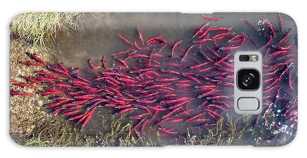 Galaxy Case featuring the photograph Spawning Kokanee Salmon by Wesley Aston